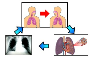 Siklus TBC