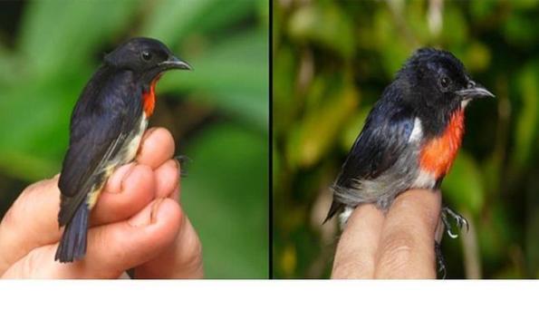 Spesies Burung Baru di Wakatobi